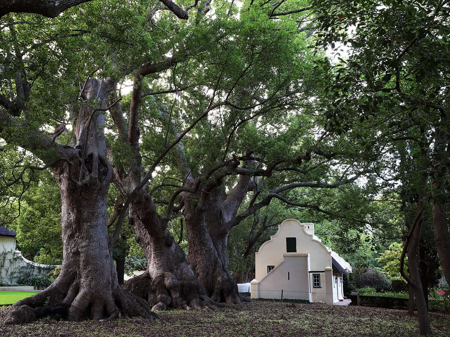 Traditional Cape Dutch building nestled in the trees at Vergelegen Wine Estate, South Africa.