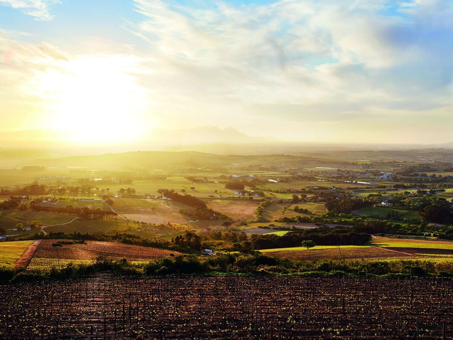 Picture-perfect sunrise view across the vineyards at Spier Wine Estate, South Africa.